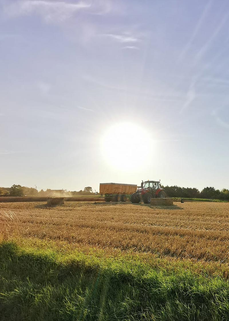 vadis-akkerbouw: zaden en aardappelpootgoed - meststoffen en bladvoeding